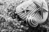 B&W seashells. — Foto de Stock
