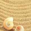 Stock Photo: Gastropod shell on sand