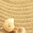 Gastropod shell on the sand — Stock Photo