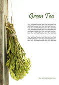 Dried green tea hanging from a rope — Stock Photo