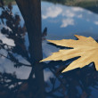 Autumn leaf floating on the water — Stock Photo #14883571