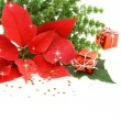 Royalty-Free Stock Photo: Red poinsettia flower with Christmas decoration