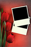 Polaroid frame and tulips on vintage background — Stockfoto