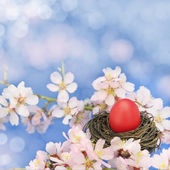 Easter egg in the nest on the almond tree — Stock Photo