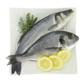 Fresh fishes with lemon and herbs on plate isolated on white — Stock Photo