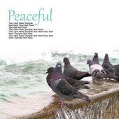 Parkta küçük çeşmenin üzerinde duran güvercinler — Stok fotoğraf