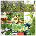 Collage of fresh herbs on balcony garden — Stock Photo
