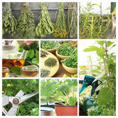 Collage of fresh herbs on balcony garden — Stock Photo