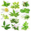 Stock Photo: Collection of fresh aromatic herbs
