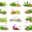 Collection of fresh and dry aromatic herbs — Stock Photo