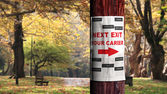 Job seeking concept, newspaper page on the tree — Stock Photo