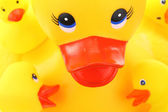 Yellow mother and children rubber ducks closeup — ストック写真