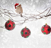 Christmas balls and sparrow bird with Santa Claus hat on snowy branch — Stock Photo