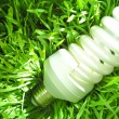 Economy light bulb on green grass — Stock Photo