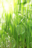 Bright sunny background with wet grass and soap bubbles — Stock Photo