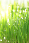 Fresh green grass with sunlight and water droplets, vertical — Stock Photo