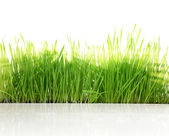 Fresh green grass with sun-rays isolated on white background — Stock Photo