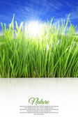 Happy vertical background with grass, blue sky and sunlight — Stock Photo