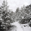 Beautiful winter landscape with snow covered trees — Stock Photo #40784809