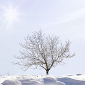 Snow covered tree on a slop — Stockfoto
