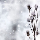 Snow covered plant on sparkle background — Stock Photo