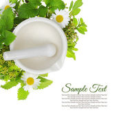 White porcelain mortar and pestle with fresh herbs around it — Stock Photo