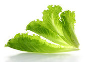Lettuce salad isolated on a white background  — Stock Photo