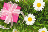 Gift box with ribbon on grass with daisy flowers — Stock Photo