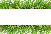 Fresh green grass banner isolated on white background  — Stock Photo