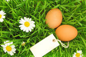 Fresh eggs on grass with flowers and blank tag — Stock Photo