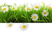 Banner with grass and flowers isolated on white — Stockfoto