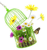 Cage with grass,flowers and insects isolated on white  — Stock Photo
