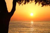 Sunset on the beach with dark tree silhouette — Stockfoto
