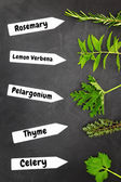 Various types of herbs with name tags on black background — Stock Photo