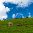 Herd of sheep on green hill against background of dark blue sky — Stock Photo #29936781
