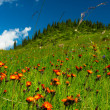 Hills, meadows in orange flowers and a green grass — Stock Photo #29936831