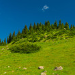 Hills, meadows and green grass in Altyn-Arashan, Kyrgyzstan — Stock Photo #29936897