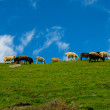 Green hill and herd of sheep against background of dark blue sky — Stock Photo #29937145