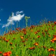Meadows in orange flowers and a green grass — Stock Photo