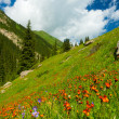 Mountains, meadows in orange flowers and a green grass — Stock Photo