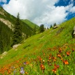 Mountains, meadows in orange flowers and green grass — Stock Photo #29937375