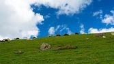 群羊山上绿色背景下的暗蓝色的天空 — 图库照片