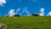 绿色山和群的暗蓝色天空背景下羊 — 图库照片