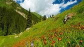 山、 草甸在橙色鲜花和绿草 — 图库照片