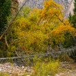 Autumn yellow paints in mountains. — Stock Photo #29960451