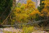 在山中的秋天黄色油漆. — 图库照片