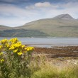 Stock Photo: Landscape; Isle of Mull