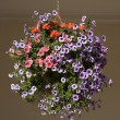Hanging Basket of Pansy - Violet Flowers — Stock Photo #46789895