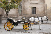 Cathedral, Seville - Sevilla with Horse and Carriage, Spain — Stock Photo