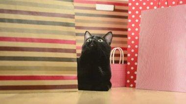 черная кошка и полосатые сумки для покупок — Стоковое видео